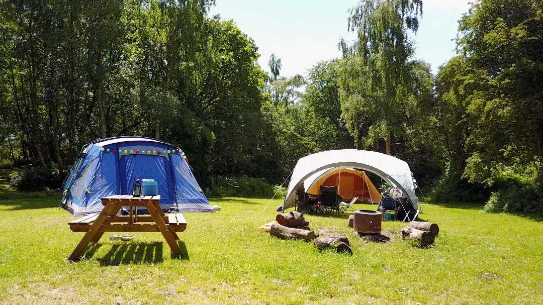 Tents on a large, sunny pitch in a woodland clearing