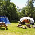 Tents on an bright, sunny camping pitch