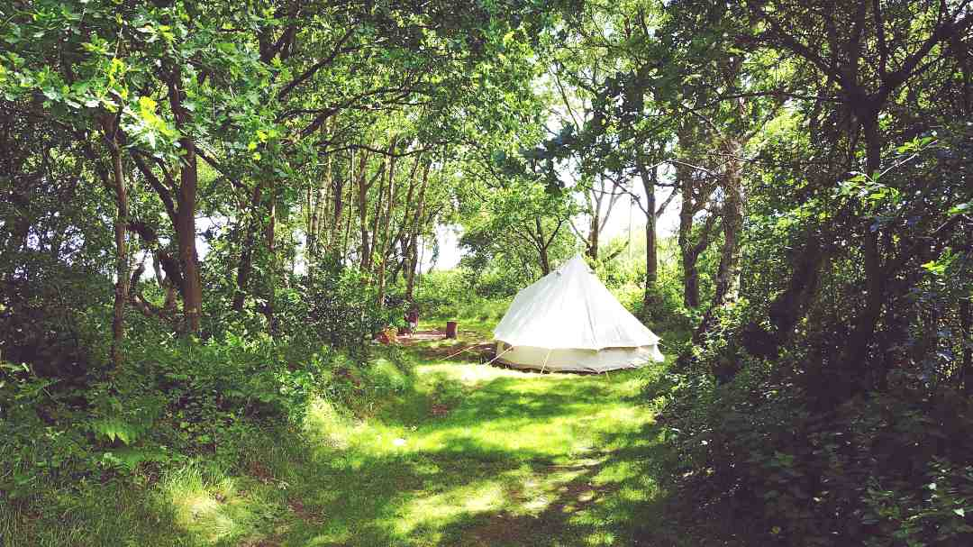 White Bell Tent in secluded woodland pitch