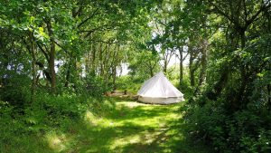White tent in a secluded woodland pitch